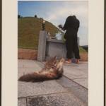 『墓地と猫』 山口 良